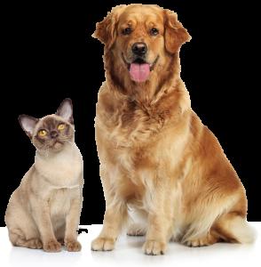 Dog&Cat