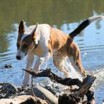 take your dog to the lake!