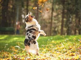 don't let you dog eat oak leaves