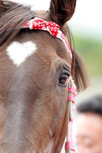 horse with heart marking