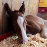 OTRL: Horse in barn