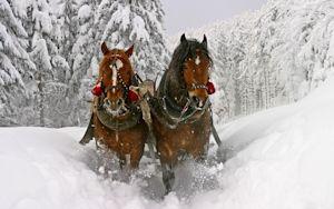 sleigh_horses