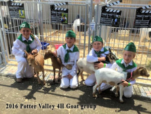 2016 Potter Valley goat group