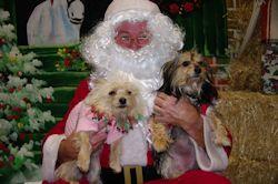 Pet photos wuth Santa